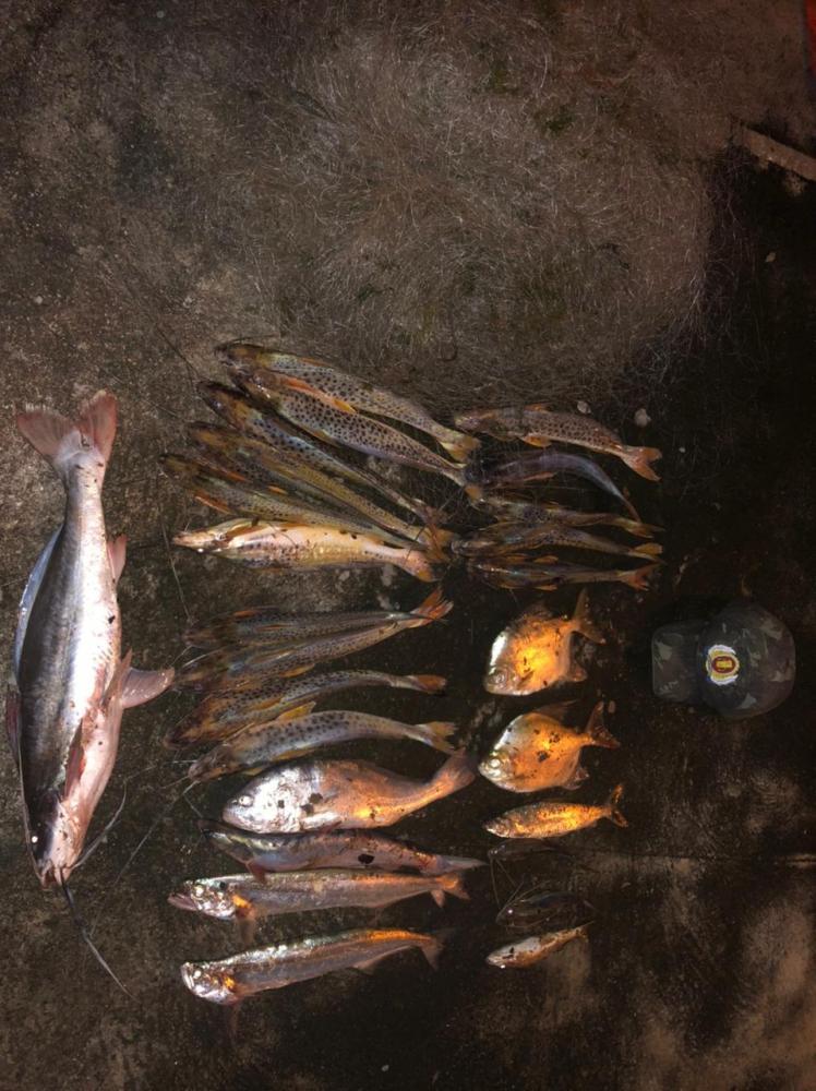 Pescado apreendidos