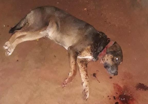 Cachorro ferido a faca por homem em Alvorada