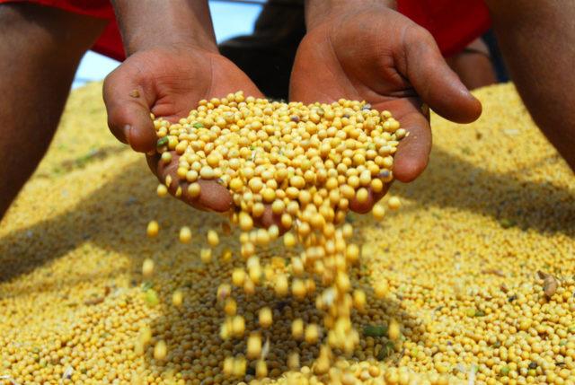 Tocatins é o maior produtor de soja na Região Norte